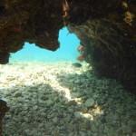Kayak Brela Marine Life of Brela 11