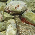 Kayak Brela Marine Life of Brela 12