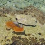 Kayak Brela Marine Life of Brela 4